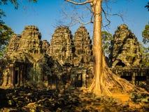 Καμπότζη prohm TA Στοκ φωτογραφίες με δικαίωμα ελεύθερης χρήσης