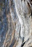 καμπύλες Στοκ εικόνα με δικαίωμα ελεύθερης χρήσης