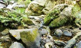 Κανάλι στο ενυδατωμένο δάσος στοκ εικόνες με δικαίωμα ελεύθερης χρήσης