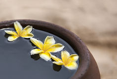 Κανάτα αργίλου με το plumeria λουλουδιών ή frangipani που διακοσμείται στο νερό Κύπελλο στο ύφος zen για τη διάθεση περισυλλογής  Στοκ φωτογραφία με δικαίωμα ελεύθερης χρήσης