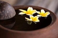 Κανάτα αργίλου με το plumeria λουλουδιών ή frangipani που διακοσμείται στο νερό Κύπελλο στο ύφος zen για τη διάθεση περισυλλογής  Στοκ Εικόνα