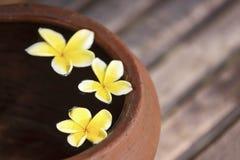 Κανάτα αργίλου με το plumeria λουλουδιών ή frangipani που διακοσμείται στο νερό Κύπελλο στο ύφος zen για τη διάθεση περισυλλογής  Στοκ εικόνες με δικαίωμα ελεύθερης χρήσης