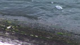 Κανάλι νερού γραμμών ακτών ποταμών φιλμ μικρού μήκους