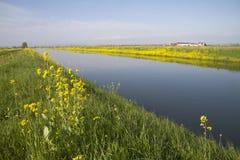 Κανάλι στη μέση των τομέων ρυζιού Στοκ φωτογραφία με δικαίωμα ελεύθερης χρήσης