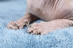 Καναδικά πόδια γατών Sphynx στοκ φωτογραφίες με δικαίωμα ελεύθερης χρήσης