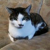 Καναπές-γάτα Στοκ Εικόνες