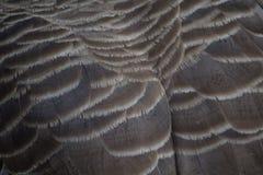 Καναδικά φτερά χήνων Στοκ εικόνες με δικαίωμα ελεύθερης χρήσης