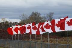 καναδικές σημαίες Στοκ φωτογραφία με δικαίωμα ελεύθερης χρήσης