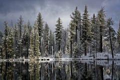 Καναδικές χήνες στη λίμνη αντανάκλασης, εθνικό πάρκο ` Lassen Στοκ Εικόνες