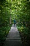 Καναδικό δάσος το πρωί Στοκ φωτογραφία με δικαίωμα ελεύθερης χρήσης