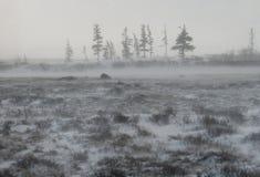 Καναδικό tundra Εθνικό πάρκο Churchill, Καναδάς αρκτικό τοπίο στοκ εικόνες