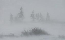Καναδικό tundra Εθνικό πάρκο Churchill, Καναδάς αρκτικό τοπίο στοκ φωτογραφία με δικαίωμα ελεύθερης χρήσης