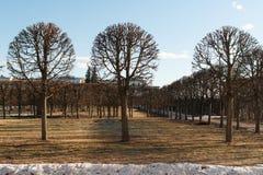 Κανονικό πάρκο στο κτήμα Arkhangelskoye την άνοιξη Στοκ Εικόνες