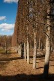 Κανονικό πάρκο στο κτήμα Arkhangelskoye την άνοιξη Στοκ Εικόνα