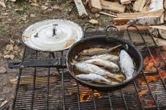 κανόνας ψαριών χρώματος exept ίσως τίποτα έξω Στοκ φωτογραφία με δικαίωμα ελεύθερης χρήσης