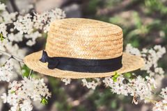 Καπέλο αχύρου σε έναν ανθίζοντας κλάδο στοκ εικόνες