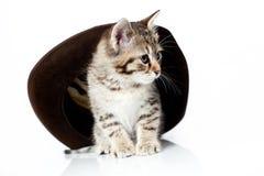καπέλο γατών Στοκ φωτογραφία με δικαίωμα ελεύθερης χρήσης