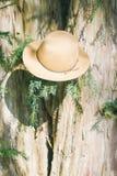 Καπέλο σε ένα δέντρο Στοκ φωτογραφία με δικαίωμα ελεύθερης χρήσης