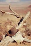 Καπέλο στο νεκρό δάσος Στοκ εικόνα με δικαίωμα ελεύθερης χρήσης
