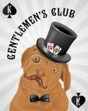 Καπέλο σκυλιών hipster Ελεύθερη απεικόνιση δικαιώματος
