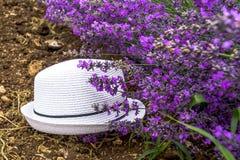Καπέλο στο lavender τομέα Στοκ φωτογραφίες με δικαίωμα ελεύθερης χρήσης