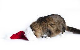 Καπέλο Santa γατών στοκ φωτογραφίες με δικαίωμα ελεύθερης χρήσης