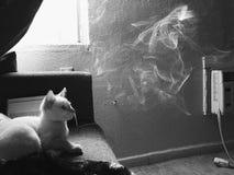 Καπνισμένη γάτα Στοκ Φωτογραφίες