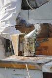 Καπνιστής ή Fogger μελισσών στοκ εικόνα