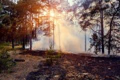Καπνός από μια πυρκαγιά στο δάσος Στοκ φωτογραφίες με δικαίωμα ελεύθερης χρήσης