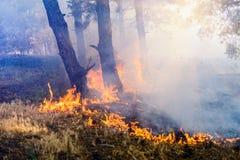 Καπνός από μια πυρκαγιά στο δάσος Στοκ φωτογραφία με δικαίωμα ελεύθερης χρήσης
