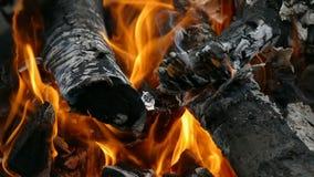 Καπνός κούτσουρων στην πυρκαγιά και απανθρακωμένος το σε αργή κίνηση βίντεο απόθεμα βίντεο
