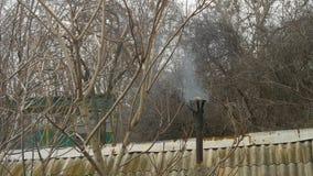 Καπνός που βγαίνει από την παλαιά μαύρη καπνοδόχο στη δασική στέγη της ζαρωμένης γκρίζας πλάκας απόθεμα βίντεο