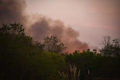Καπνός στο δασικό δέντρο πυρκαγιάς Στοκ εικόνες με δικαίωμα ελεύθερης χρήσης
