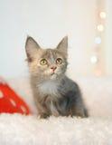 Καπνώδης ασυνήθιστη όμορφη γάτα σε ένα νέο εσωτερικό έτους ` s abstract background backgrounds blurr blurred bright brightly cele Στοκ εικόνα με δικαίωμα ελεύθερης χρήσης