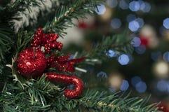 Καραμέλα στο δέντρο με το διάστημα για να γράψει το μήνυμα Χριστουγέννων στοκ φωτογραφία με δικαίωμα ελεύθερης χρήσης