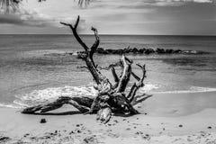 Καραϊβικές Θάλασσες δυτικών ακτών Σεπτεμβρίου Στοκ φωτογραφία με δικαίωμα ελεύθερης χρήσης