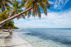 καραϊβική θάλασσα φοινικ Στοκ εικόνα με δικαίωμα ελεύθερης χρήσης