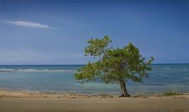 Καραϊβική θάλασσα Στοκ Εικόνα