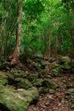 Καραϊβική κατακόρυφος ζουγκλών Στοκ Φωτογραφίες
