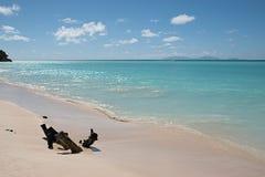 Καραϊβική παραλία με το τυρκουάζ μπλε νερό Στοκ Φωτογραφία