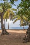 Καραϊβική παραλία στη Γουαδελούπη Στοκ φωτογραφίες με δικαίωμα ελεύθερης χρήσης