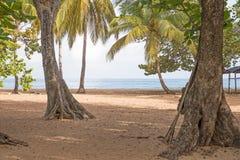 Καραϊβική παραλία στη Γουαδελούπη Στοκ Εικόνες