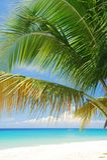 Καραϊβική παραλία, ST Croix, USVI Στοκ φωτογραφία με δικαίωμα ελεύθερης χρήσης