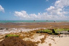 Καραϊβική σκηνή θάλασσας Στοκ Φωτογραφίες