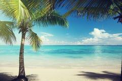 Καραϊβικοί θάλασσα και φοίνικες Στοκ Εικόνες
