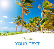 καραϊβικός ήλιος φοινικών παραλιών στοκ εικόνα