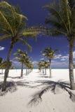 Καραϊβικός διάδρομος φοινίκων Στοκ εικόνες με δικαίωμα ελεύθερης χρήσης