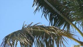 Καραϊβικός καταρράκτης φιλμ μικρού μήκους