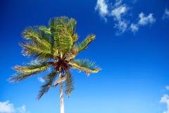 καραϊβικός ουρανός φοινι Στοκ εικόνα με δικαίωμα ελεύθερης χρήσης