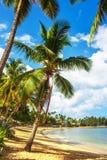 καραϊβικός παράδεισος παραλιών Στοκ Φωτογραφία